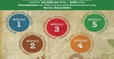21 de marzo. VII Diplomado en Restauración Ecológica de Bosque de Niebla